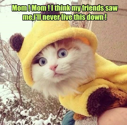 live cat saw down never friends think caption mom