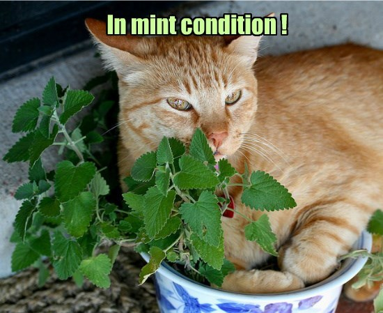 mint caption Cats - 8799302400