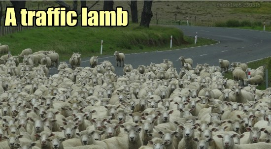When you get stuck in traffic in New Zealand, you're in....