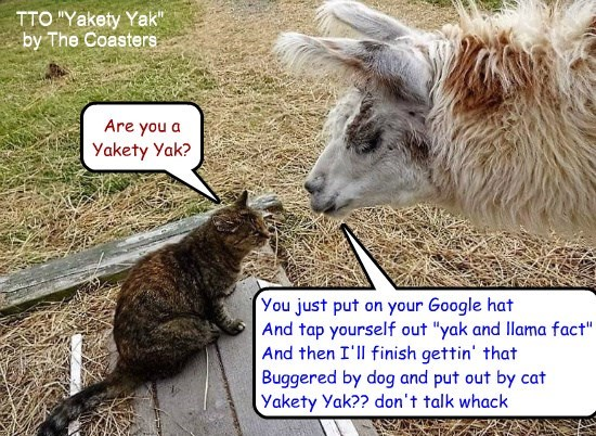 """Yak Confusion"" (TTO ""Yakety Yak"" by The Coasters)"