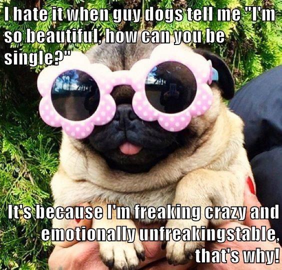 animals crazy dogs single caption unstable beautiful - 8799352576