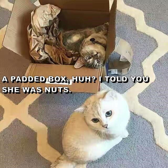 A PADDED BOX, HUH? I TOLD YOU SHE WAS NUTS.