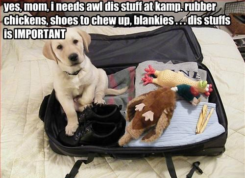 yes, mom, i needs awl dis stuff at kamp. rubber chickens, shoes to chew up, blankies . . . dis stuffs is IMPORTANT