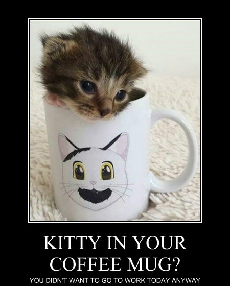 KITTY IN YOUR COFFEE MUG?