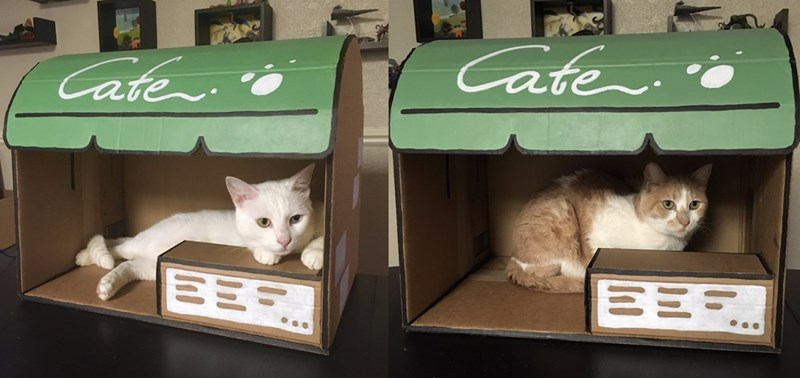 Cat - Cate Cate