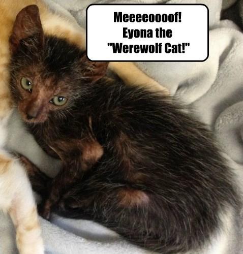 Part cat, part something else!