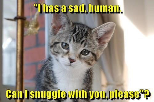 """I has a sad, human. Can I snuggle with you, please""?"