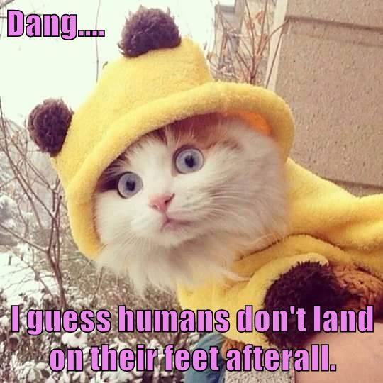 animals land caption Cats - 8799603200