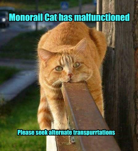 transportation malfunctioned monorail cat alternate caption