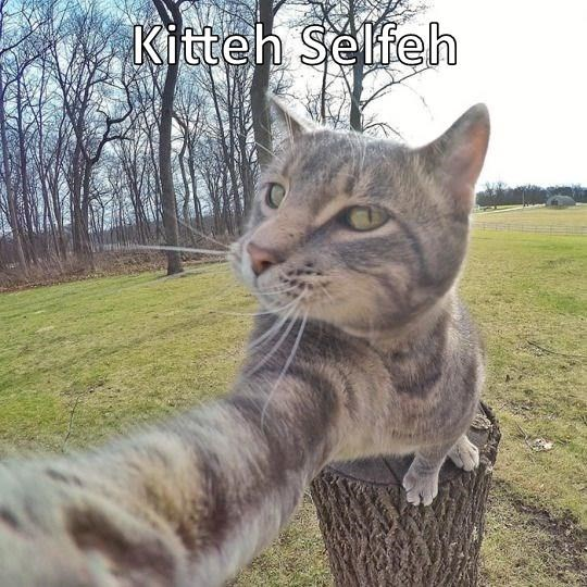 animals selfie caption Cats - 8799612672