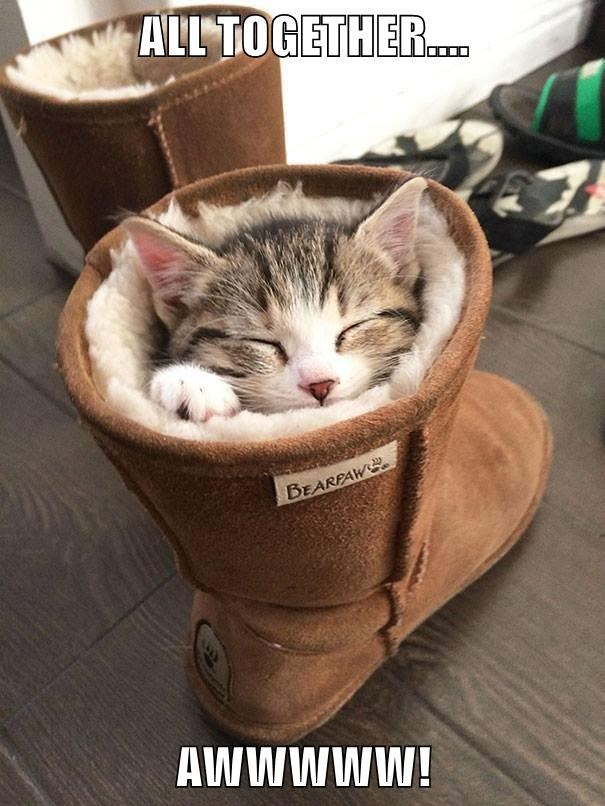 ugg,kitten,caption,boot