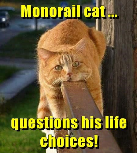animals life monorail cat choices caption questions - 8799643648