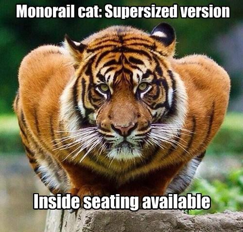 Monorail cat Supersized