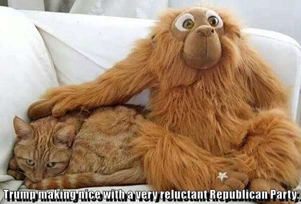animals cat making reluctant trump nice republican caption - 8799662080