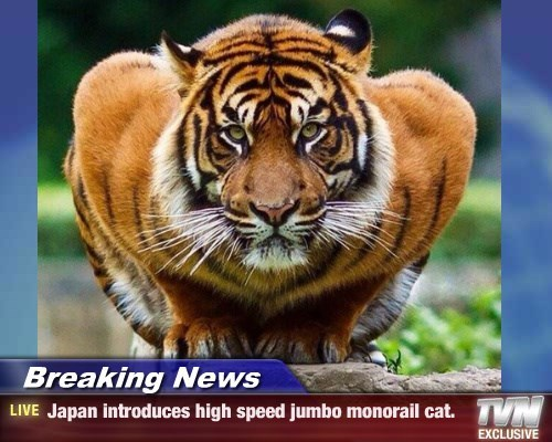 news,monorail cat,tiger,caption