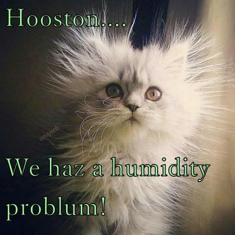 animals floof humidity caption Cats - 8799672064
