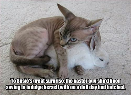 easter cat egg caption bunny - 8799748864