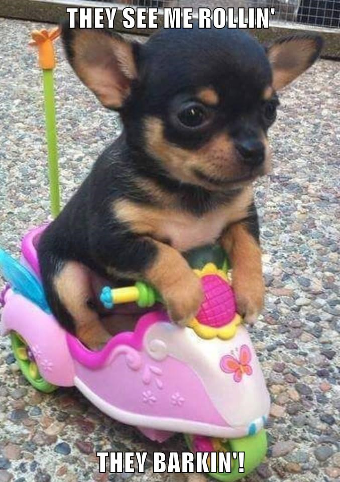 animals dogs wheels puppy bark caption - 8799795456