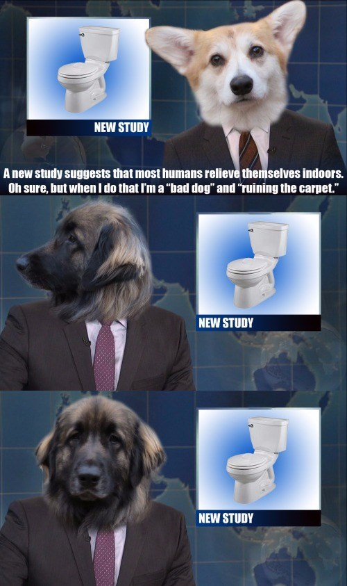 if dogs hosted snls weekend update