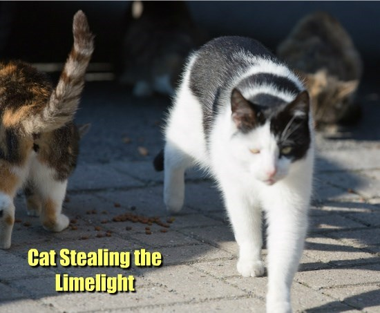 Cat Stealing the Limelight