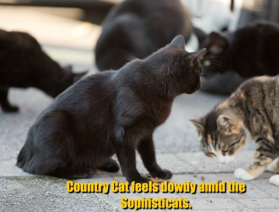 Country Cat feels dowdy amid the Sophisticats.