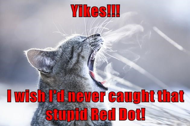 animals yikes red dot caption Cats