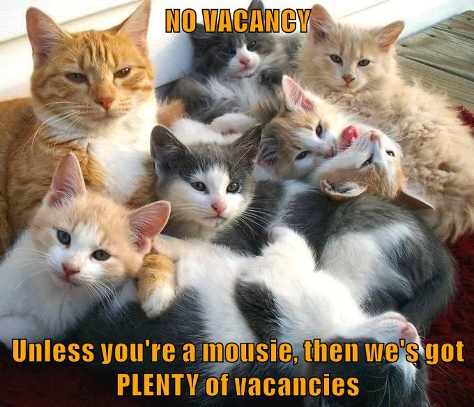 NO VACANCY  Unless you're a mousie, then we's got PLENTY of vacancies