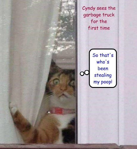 Cyndy sees the garbage truck for the first time