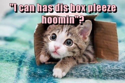 box,kitten,caption