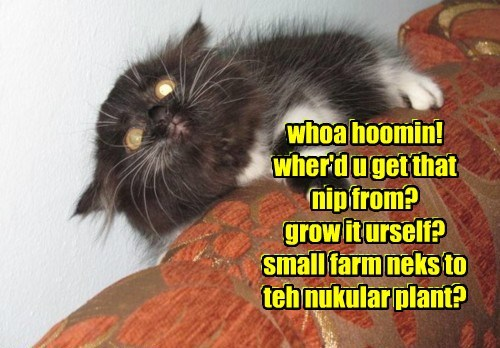 whoa hoomin! wher'd u get that nip from? grow it urself? small farm neks to teh nukular plant? whoa hoomin! wher'd u get that nip from? grow it urself? small farm neks to teh nukular plant?