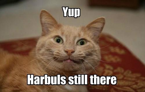 hairball caption Cats - 8800040448