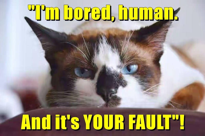 animals your cat fault human bored caption