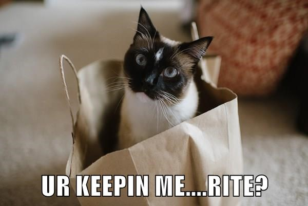 animals keep bag caption Cats - 8800047104
