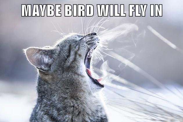 animals bird caption Cats - 8800058880