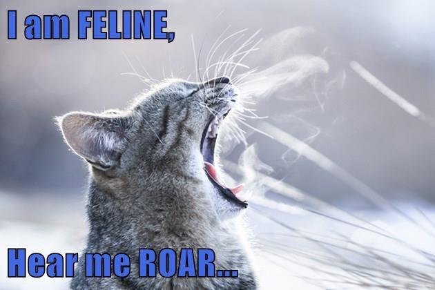 animals cat me hear feline roar caption - 8800066560