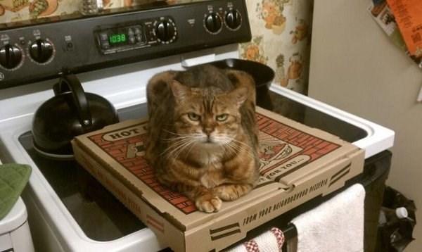 Cat - 1038 HOT 11