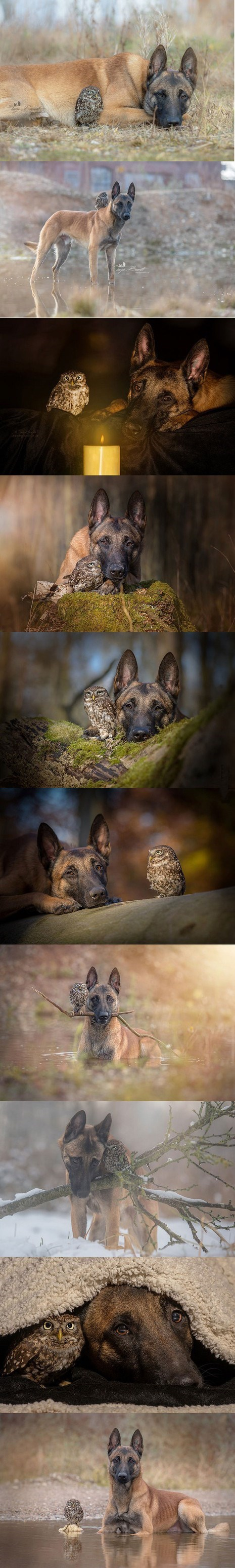 ingo the dog and poldi the owl are the best of friends