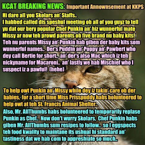 KCAT BREAKING NEWS: KKPS Principal Dontebanfinkaboutit annownses Chef Punkin an' Missy hab new baby kits born to dem! All Skolars an' Staffs ar overjoyed at teh happy news..