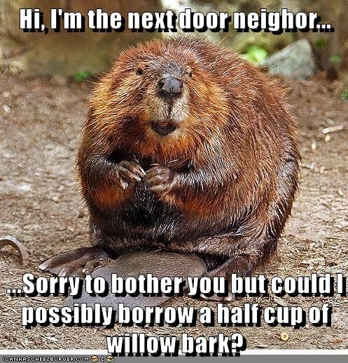 Hi, I'm the next door neighor...  ...Sorry to bother you but could I possibly borrow a half cup of willow bark?