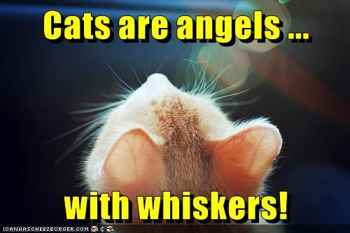 with,angels,Cats,whiskers