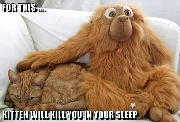 stuffed animal,sleep,monkey,kill,caption,Cats