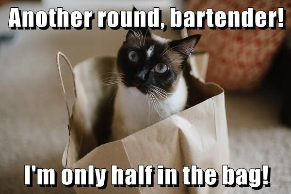 animals bag bartender caption Cats - 8800194304