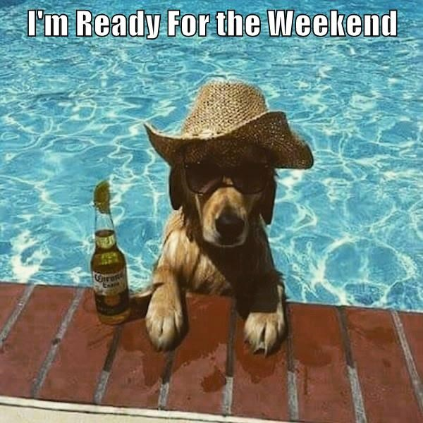 beer,dogs,pool,weekend,caption