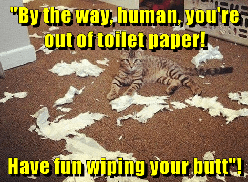 toilet paper,caption,mess,Cats