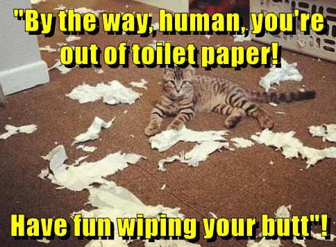 animals toilet paper caption mess Cats - 8800333312