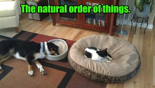 dogs,natural,bed,order,caption,Cats