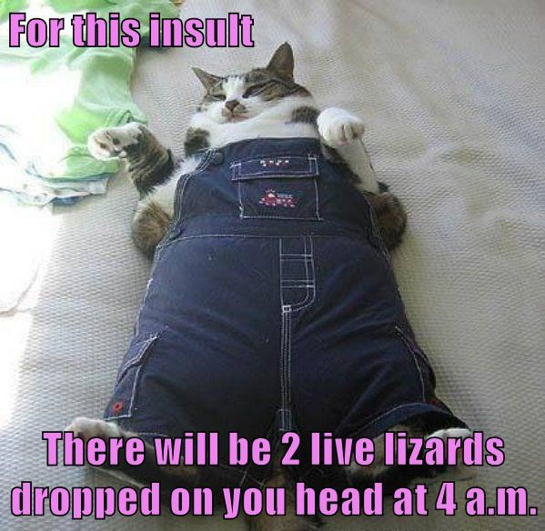 animals lizards caption Cats overalls - 8800364288