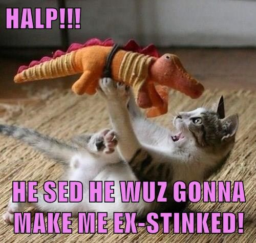 animals dinosaur help caption Cats - 8800385280