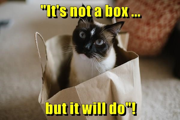 animals cat box it will do not caption - 8800400640