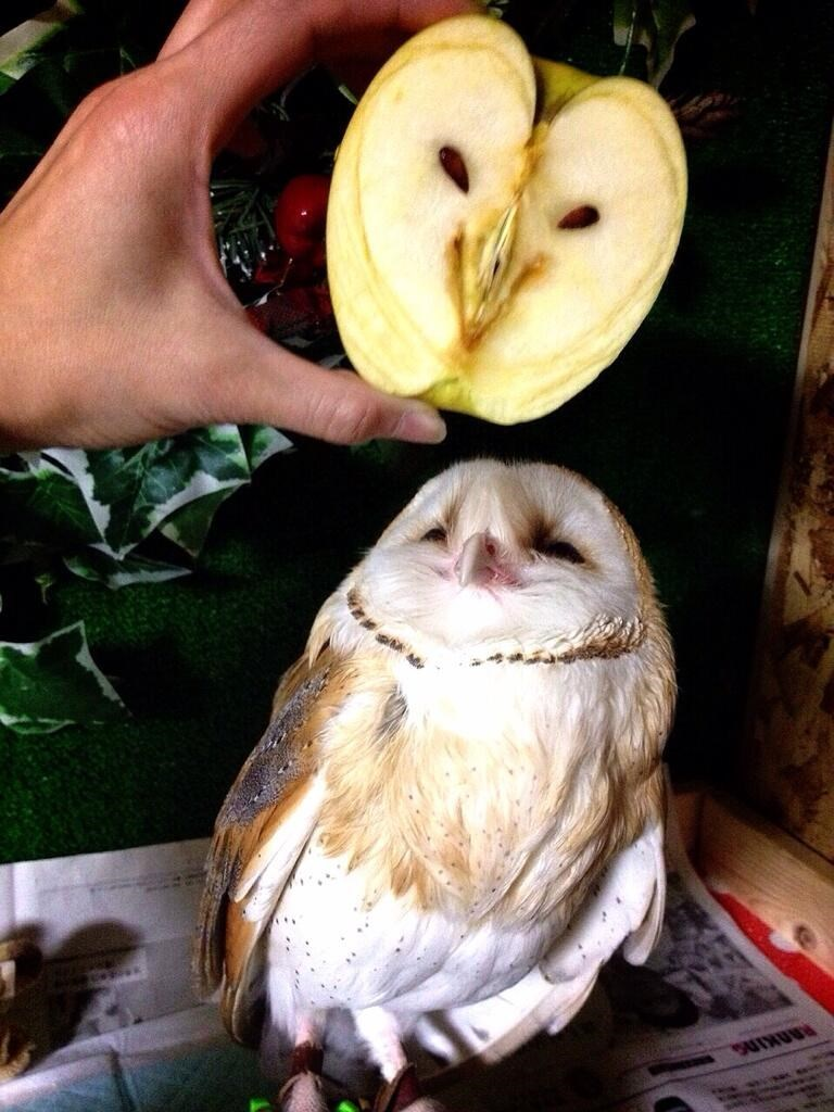 owl looks like an apple